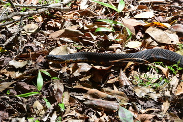 A snake in the shadow of sunlight in South Carolina in the USA