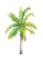 Watercolor palm tree, isolated on a white background.