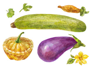 Vegetables painted in watercolor. Zucchini, eggplant and squash in vintage style