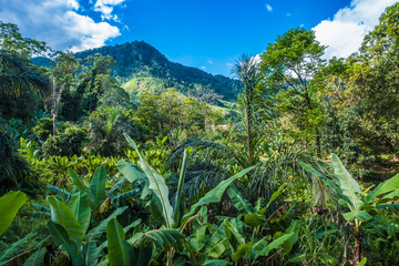 Lush primeval forests, Ranomafana (hot water in Malagasy) National Park, Madagascar