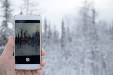 phone in hand on the winter forest background