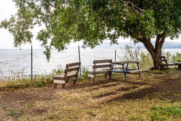 Benches under a tree overlooking the Sea of Galilee, Lake Tiberias, Israel.