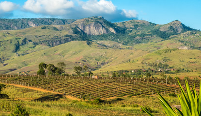 Vineyards near Fianaratsoa (Good education in Malagasy), the second largest city in Madagascar and at the center of its wine-making region