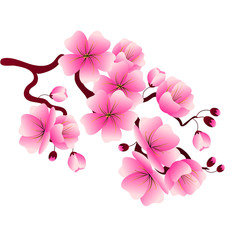 Cherry blossom branch with pink flowers for decorating banners, flyers, posters, websites.