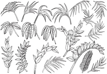 Hand drawn Tropical palm jungle plants set