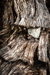 stone in the wood