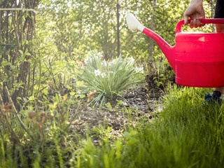 person pouring water on flower in the garden with watering can