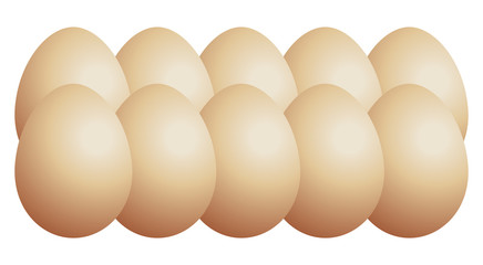 Set of chicken eggs - stock vector