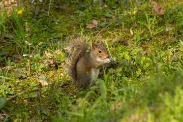 Squirrel  7 jim_1571