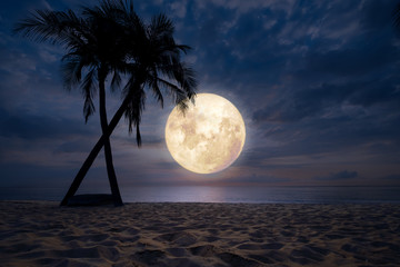 Wall Mural - Beautiful fantasy of tropical beach with silhouette palm tree in night sky, full moon - dreamlike wonder nature.