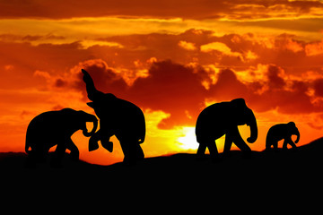 silhouette elephant battle and family herd animals wildlife evacuate walking in twilight sunset beautiful background. with copy space add text