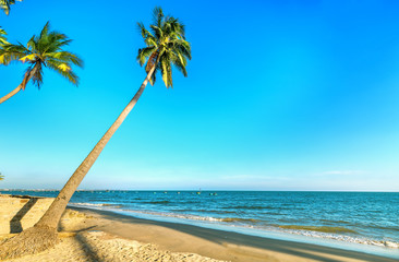 Inclined coconut trees leaning toward the tropical beach on summer afternoon, below are a beautiful boat mooring