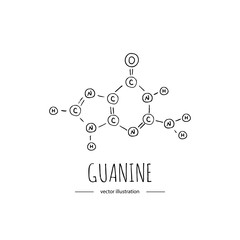 Hand drawn doodle Guanine chemical formula icon Vector illustration nitrogenous base symbol Cartoon sketch genome element DNA component on white background Carbon Atom Nitrogen Molecule Bond Oxygen