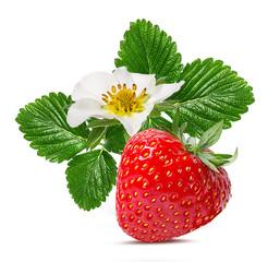 Leinwandbilder - strawberry and strawberry flower isolated on white background
