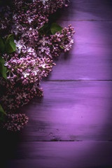 spring lilac on a wooden, purple background.