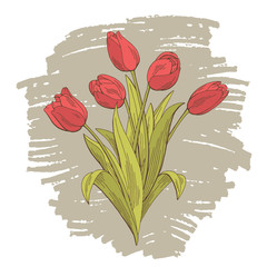 Tulip flower graphic color isolated bouquet sketch illustration vector