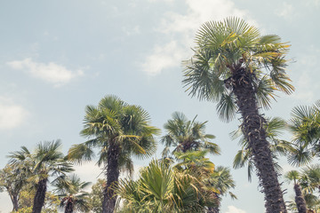 Low angle shot of palm trees