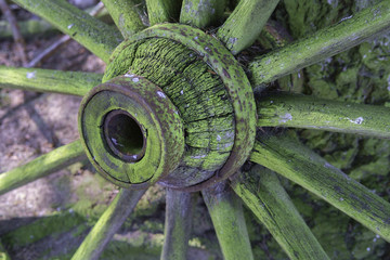 Central detail of traditional spoked cart wheel, covered in green fungus