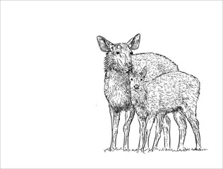 Deer female with baby , hand draw sketch vector.