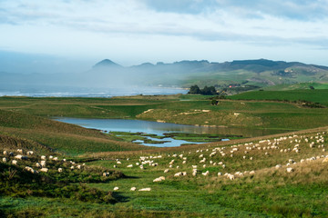 Stunning scene Cloudy and blue sky with sheeps farmland on the   green grassland beside the ocean. New Zealand agriculture in the rural area.