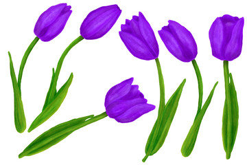 Set of hand drawn colorful tulips flower. Beautiful garden plants in sketch style for design greeting card, package, textile. Cartoon illustration isolated on white background.