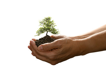 Hands holding and caring a small tree isolated on white background