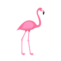 Pink flamingo bird isolated on white background. Vector illustration