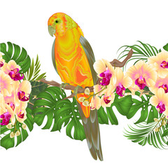 Foto op Canvas Papegaai Floral border seamless background and Sun Conure Parrot standing on a yellow orchid Phalaenopsis and palm, phiodendronon on a white background vector illustration editable hand draw