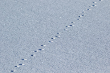 Animal tracks in Snow on a cold winter day