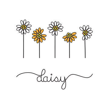 White and orange daisy flowers, vector graphic illustration. Hand drawn daisies with writing daisy.