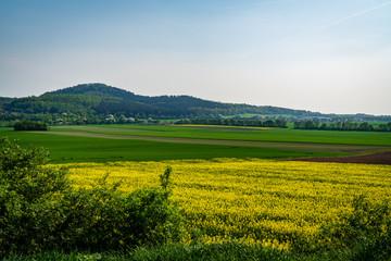 Grass Field in Germany