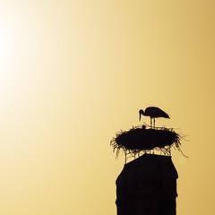 Storch im Nest bei Brutpflege
