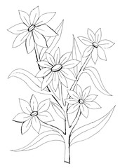 Outline drawing of a decorative flower for coloring