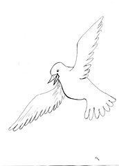 Contour drawing of a flying dove