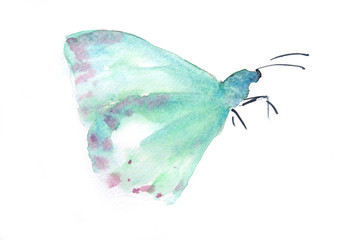 Blue butterfly on white background, watercolor illustrator, hand painted