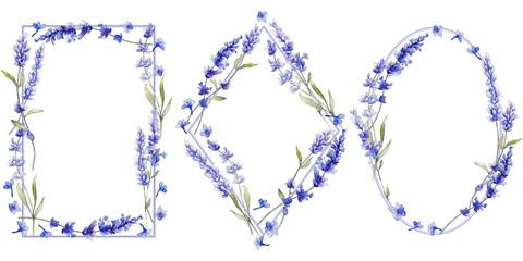 Violet lavender. Floral botanical flower. Wild spring leaf wildflower isolated. Aquarelle wildflower for background, texture, wrapper pattern, frame or border.