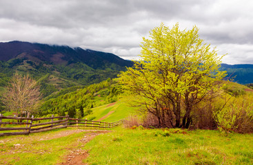 mountainous countryside in springtime. fence down the hill along the country road. tree on the grassy hill. distant mountains under the overcast sky