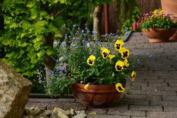 Garden decoration, ceramic pot with daisies.