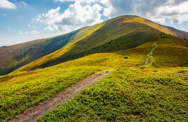 path to the top of the mountain. beautiful summer landscape. great destination to travel. location Velykyi Verkh peak of Borzhava ridge in Carpathian mountains, Ukraine