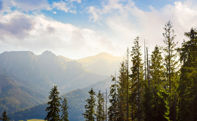 High Tatra mountains behind the trees. lovely nature scenery in beautiful light.