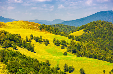 beautiful landscape of Krasna mountain ridge. grassy slopes and forested hill under the blue summer sky with fluffy clouds. location Carpathian mountains, Ukraine