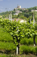 Landscape of a Italian vineyard valley