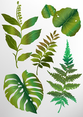 A set of green tropical exotic leaves of different shapes. Vector illustration.