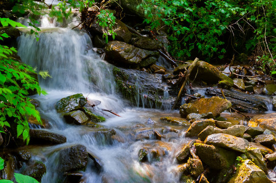 small waterfall in forest. lovely summer nature scenery. fresh and clean environment