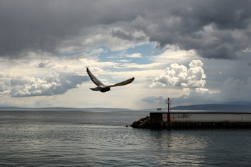 Papiers peints Navire Seascape with dark clouds, moody wallpaper, seagull in flight over the sea, Adriatic sea, Opatija Croatia