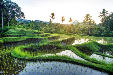 Printed kitchen splashbacks Bali Rice terraces on Bali during sunrise, Indonesia