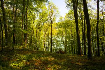 Forest scenery. Bieszczady National Park, Poland, Europe