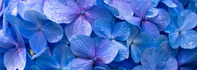 Fundo com flores azuis Wall mural