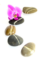 A line  of stones with pink orchid isolated on white background