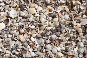 Background of shells